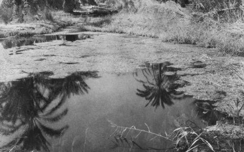 Η όαση της Σίβας (1929-30)